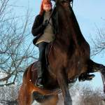 Signs Your Horse May Need Their Teeth Floated