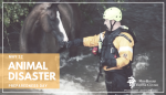 Horse Natural Disaster Planning