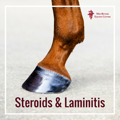 steroids and laminitis in horses
