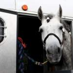 Things To Know When Traveling With Horses