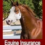 Equine Insurance - The Basics