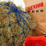 When Is It Time To Switch Your Horse To Senior Feed?