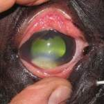 Understanding Corneal Ulcers With Dr. Tim Ellis