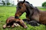 The Importance Of Having Your Mare & Foal Evaluated After Foaling