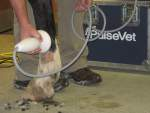 Regenerative Shock Wave Therapy for Horses
