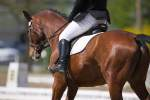 """Benefits of """"Tapering"""" in Athletic Horses Studied"""