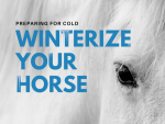 Winterizing Your Horse