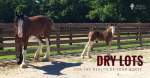 Why To Have A Dry Lot For Your Horse's Health