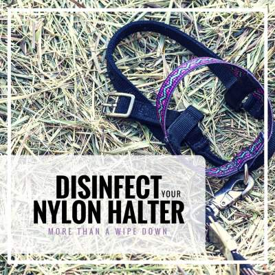 How to disinfect your nylon halter