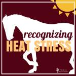 recognizing heat stress in horses