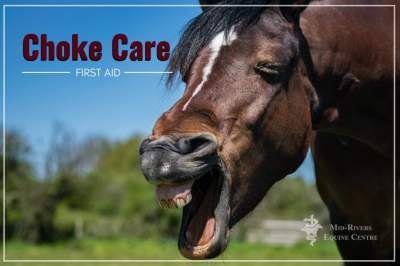 What to do when your horse chokes.