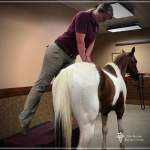 Dr. Devereux Equine Chiropractic Care