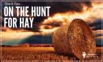 Hunt For Hay In Lean Times