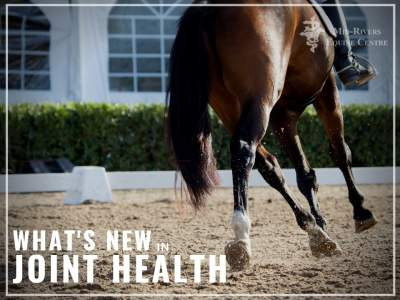 What's New In Joint Health: Noltrex®Vet