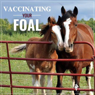 What vaccinations should your foal receive?